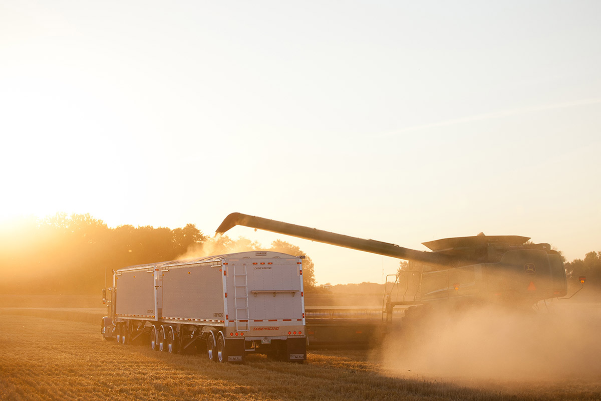 Lode King Grain