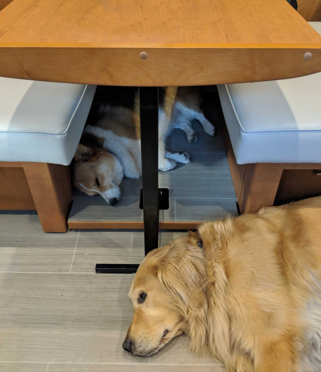 dogs under table