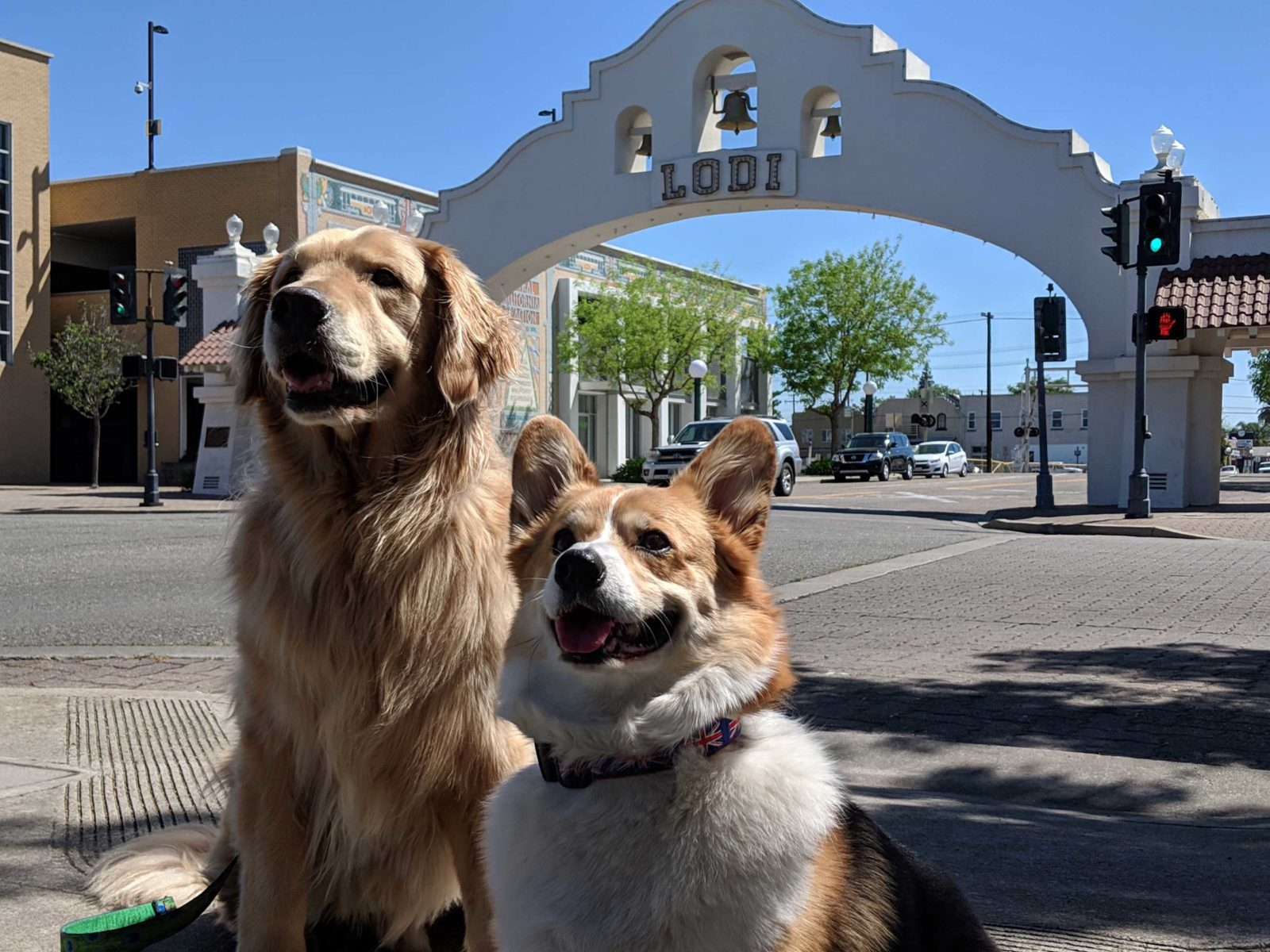 Dogs in front of Lodi sign