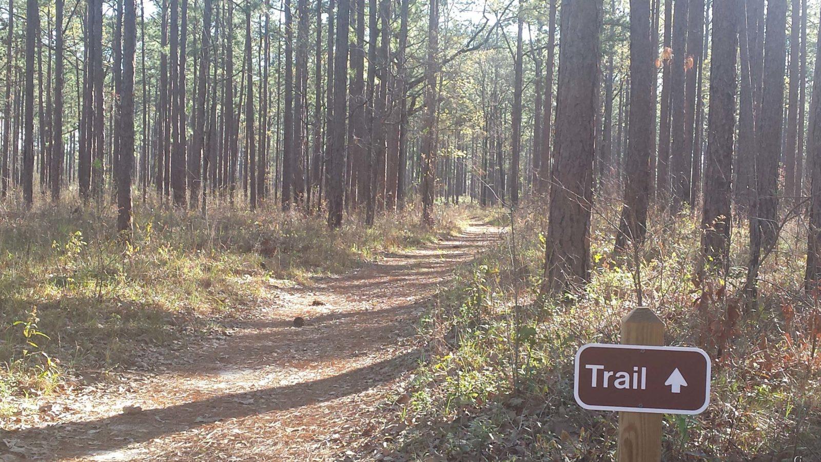 The Gopher-Tortoise Trail in Georgia